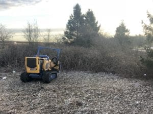 Site clearance - before