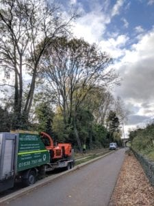 Tree clearance works on the guided busway