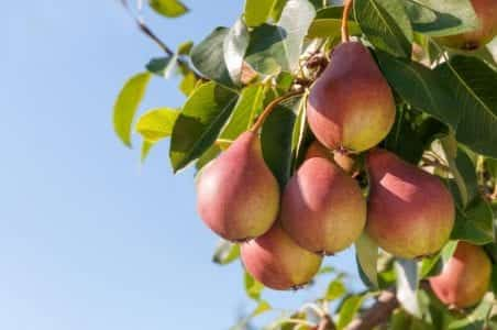 Pick the Low Hanging Fruit - Lily Head Dental Practice Sales